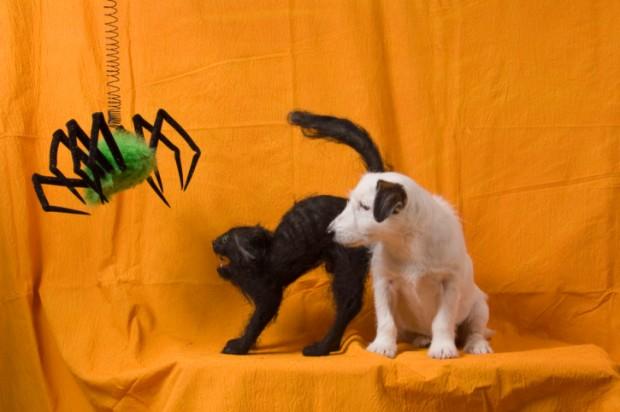 halloween sicuro per cani e gatti