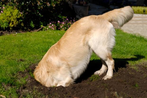 perché il cane sotterra ossa