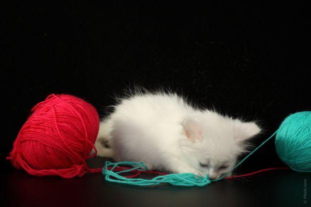 palle di pelo nel gatto