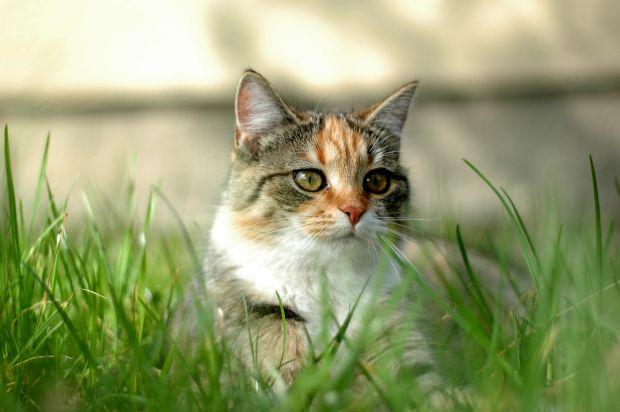 malattie intestinale nel gatto