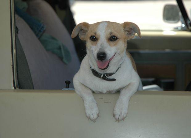 legge trasporti animali in auto
