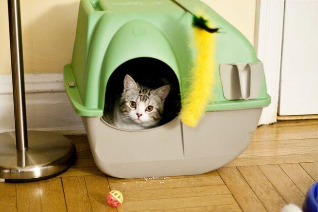 lettiera coperta gatti
