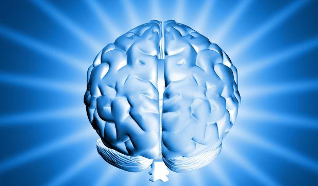funzionamento cervello