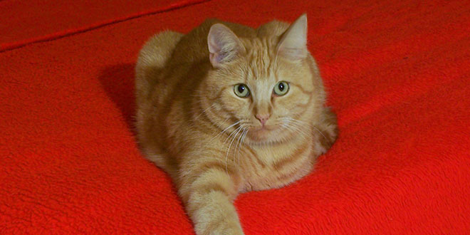 Gatto fa pip sul letto o sui vestiti cause e rimedi - Dolore alle gambe a letto ...