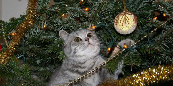 albero di natale a prova di gatto
