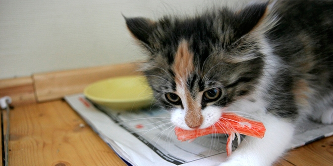 Perch il gatto rovescia la ciotola e mangia il cibo da terra for Disegno gatto facile