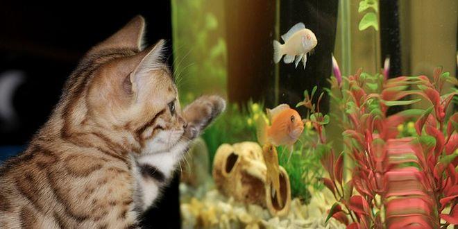 come scegliere il primo acquario