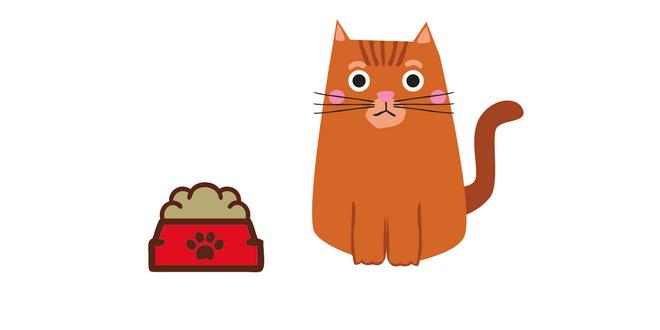 perdita di peso nel gatto cause