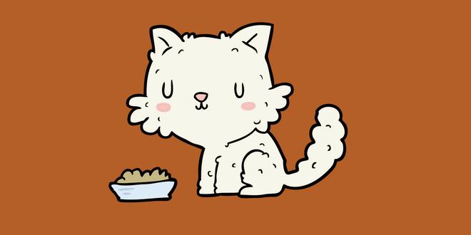 gatto non mangia cause