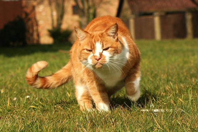 coda gatto agitato