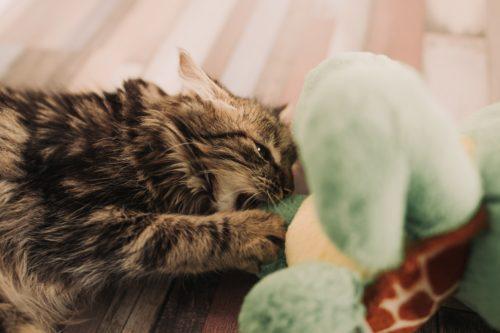 gatto attacco giocoso coda