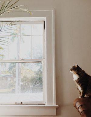 coda gatto concentrato
