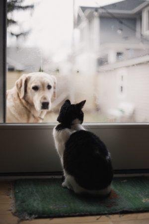 gatto coda gonfia