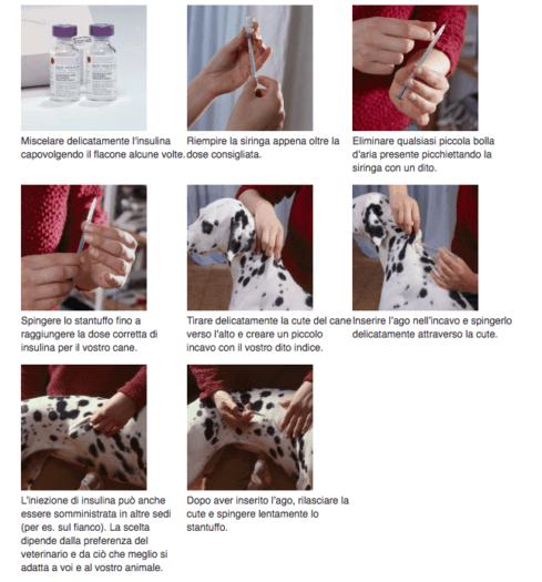 iniezione insulina cane