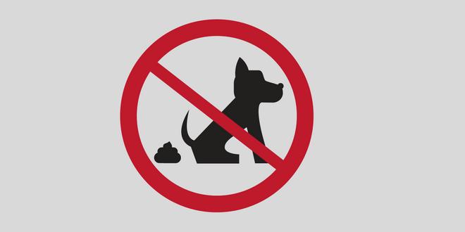 cacca dei cani multe legge