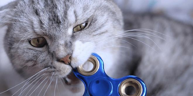 perché il gatto morde