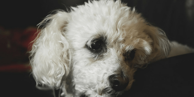 cucciolo che ha paura