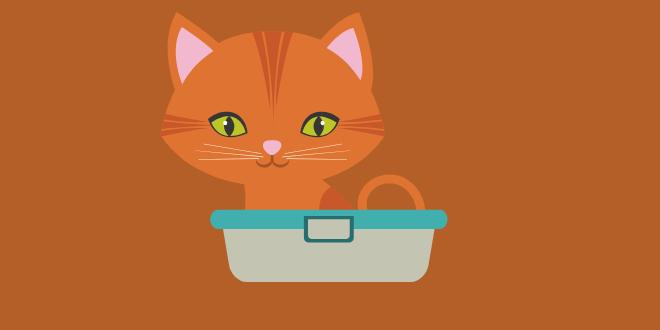 diarrea nel gatto cause