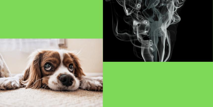 cane rischi fumo passivo marijuana