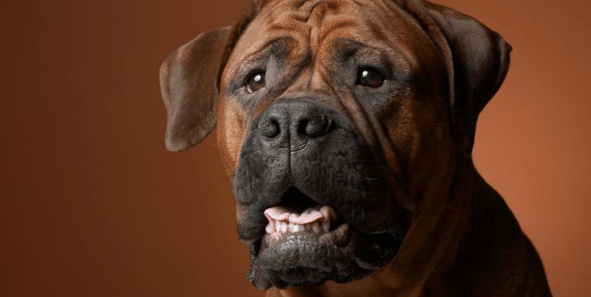 comportamento cani falsi miti