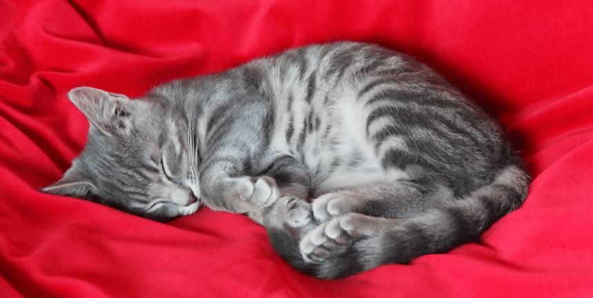 gatto trema quando dorme