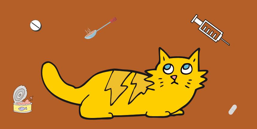 dare una pastiglia al gatto