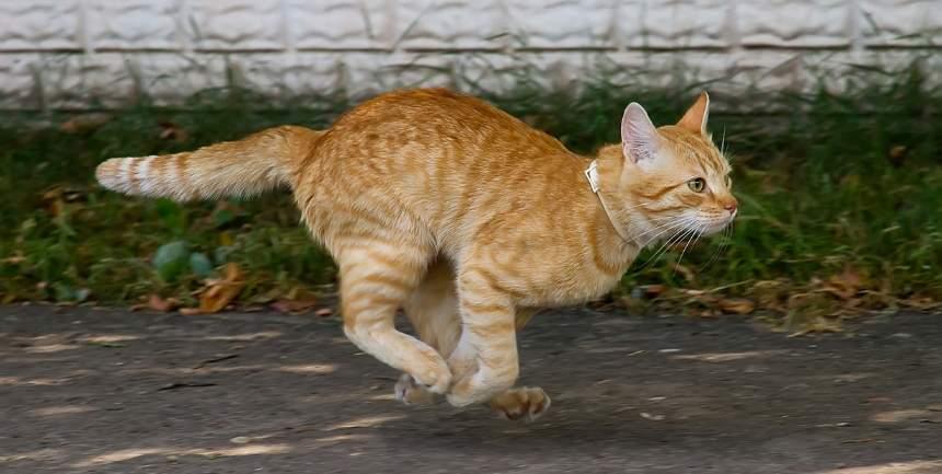 gatto corre di notte