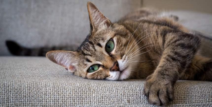 gatto graffia il divano