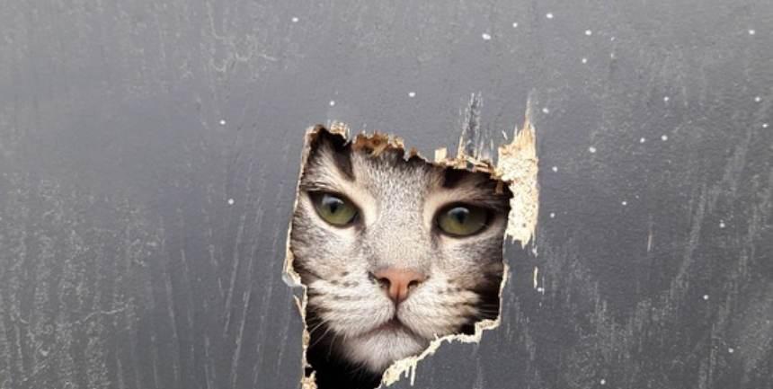gatto che appoggia la testa al muro