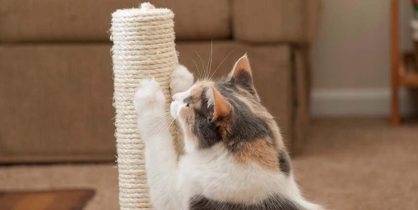 tiragraffi per gattino