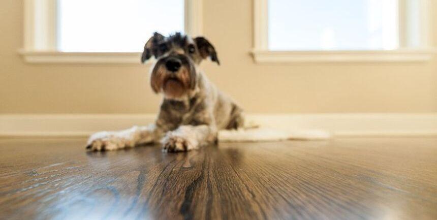 cane trascina e strofina sedere a terra