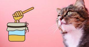 gatto mangia miele