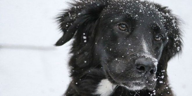 cane perde pelo in inverno