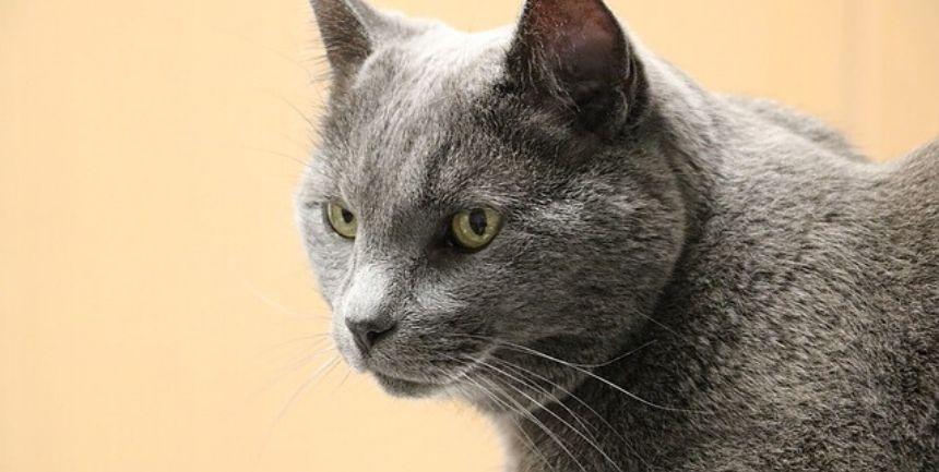 gatto anziano con problemi di salute