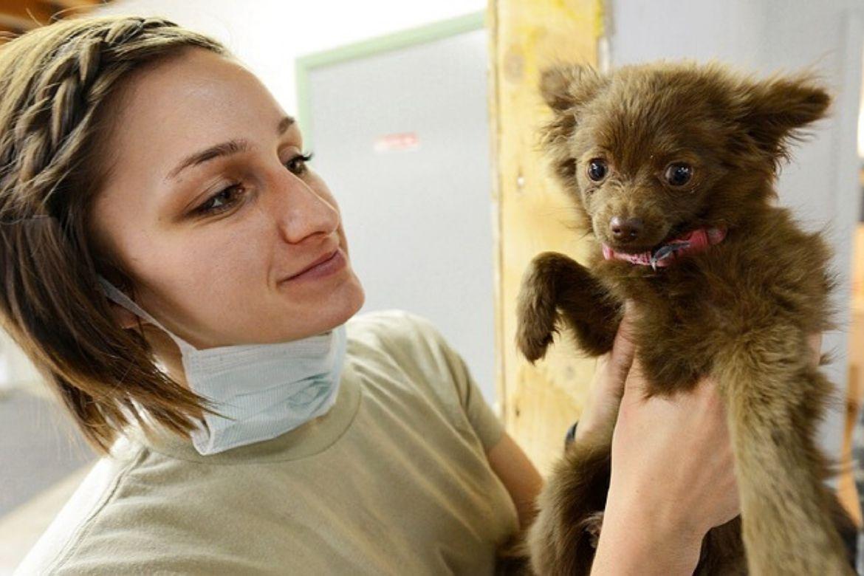 coronavirus cani contagio